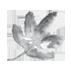 leaf_ikon_transperant